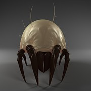 Grey Background Photos - Dust Mite, Artwork by Sciepro