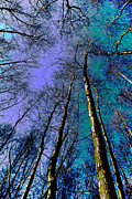 Epping Art - Epping Forest Trees by David Pyatt