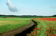 Outdoors Art - Field of poppies. by Bernard Jaubert