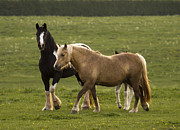 Horse Pasture Prints - Horses On The Meadow Print by Angel  Tarantella