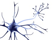 Neurons Metal Prints - Nerve Cell Metal Print by Pasieka
