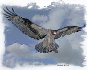 Animal Digital Art Digital Art Prints - Osprey Flight Print by Larry Linton