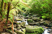 Nature Scene Prints - Stream Print by MotHaiBaPhoto Prints