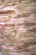 Built Structure Photos - Tree Bark by John Foxx