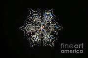 Crystals Art - Snowflake by Ted Kinsman