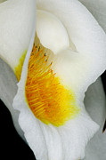 Close Up Framed Prints - Exotic Orchids of C Ribet Framed Print by C Ribet