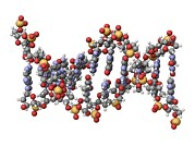 Deoxyribonucleic Acid Photos - Dna Molecule, Artwork by Laguna Design