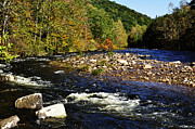 Trout Photo Posters - Fall along Williams River Poster by Thomas R Fletcher