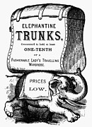 Tusk Prints - MORTISED CUT, 19th CENTURY Print by Granger
