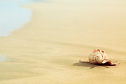 Miami Heat Photo Prints - Seashell Print by MotHaiBaPhoto Prints