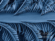 Bluebird Metal Prints - Sem Of Eastern Bluebird Feathers Metal Print by Ted Kinsman