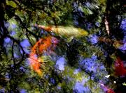 Koi Pond Metal Prints - The Koi Pond Metal Print by Marc Bittan