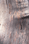 Full Frame Metal Prints - Tree Bark Metal Print by John Foxx