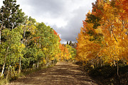 Autumn Photographs Photo Metal Prints - Rocky Mountain Fall Metal Print by Mark Smith