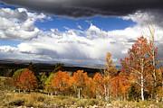 Landscape Framed Prints Prints - Rocky Mountain Fall Print by Mark Smith