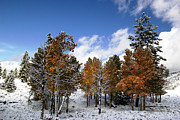 Forest Photographs Prints - Rocky Mountain Fall Print by Mark Smith