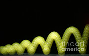 Bouncing Prints - Bouncing Ball Print by Ted Kinsman