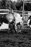 Riding Photos - Bull Rider by Rick Rowland
