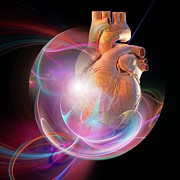 Biomedical Illustration Art - Human Heart, Artwork by Laguna Design