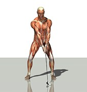 Golf Posters - Male Muscles, Artwork Poster by Friedrich Saurer