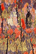 Color Framed Prints - Tree Bark Framed Print by John Foxx