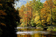 Williams Prints - Williams River Autumn Print by Thomas R Fletcher