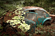 Volkswagen Beetle Framed Prints - A 65 Bug in the Overgrowth Framed Print by Michael David Sorensen