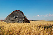 Wooden Barns Prints - A Barn Slowly Crumbles In A Prairie Print by Pete Ryan