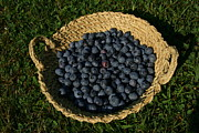 Baskets Photos - A Basket Of Fresh-picked Maine by Stephen St. John