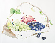 White Grape Posters - A Basket Of Fruit Poster by Ayako Tsuge