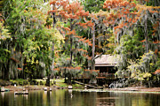 Caddo Framed Prints - A Bayou Retreat Framed Print by Lana Trussell