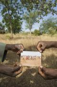 Burkina Faso Prints - A Before And After Photograph Print by Jim Richardson