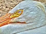 A Bird's Eye View Print by Michael Garyet