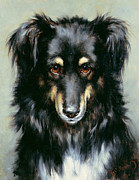 Collie Paintings - A Black and Tan Collie by Robert Morley