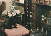 Photography Of Black Cats Photos - A Black Domestic Shorthair Cat Sits by Willard Culver