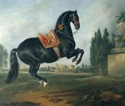 Black  Prints - A black horse performing the Courbette Print by Johann Georg Hamilton