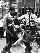 Police Dog Posters - A Black Man Is Attacked By A Policeman Poster by Everett
