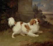 White Tail Paintings - A Blenheim Spaniel by William Webb
