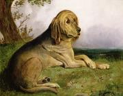 Grassy Posters - A Bloodhound in a Landscape Poster by English school