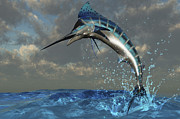 Isolated Digital Art Prints - A Blue Marlin Flashes Its Iridescent Print by Corey Ford