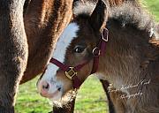 Terry Kirkland Cook - A Brand New Foal