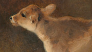 Eyes  Paintings - A Calf by GW Horlor