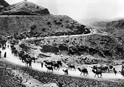 20st Century Photos - A Camel Caravan On The Khyber Pass by Everett