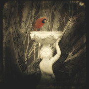 Avian Art Metal Prints - A Cardinal  Metal Print by Gothicolors And Crows