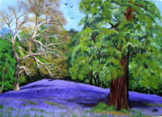 Bluebells Paintings - A Carpet of Bluebells by Carol Williams