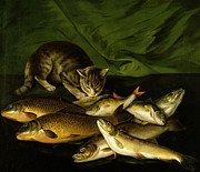 Fish Painting Metal Prints - A Cat with Trout Perch and Carp on a Ledge Metal Print by Stephen Elmer