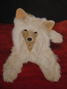 Vickie Roche - A Chinese Crested Dog