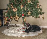 Cindy Nunn - A Cleo Christmas