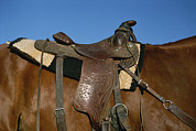 Sporting Goods Posters - A Close View Of A Saddle On A Horse Poster by Taylor S. Kennedy