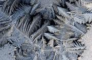 Close Views Prints - A Close View Of Frost Crystals Print by Tim Laman